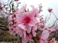 春暖花开踏青!平谷京东大峡谷一日游